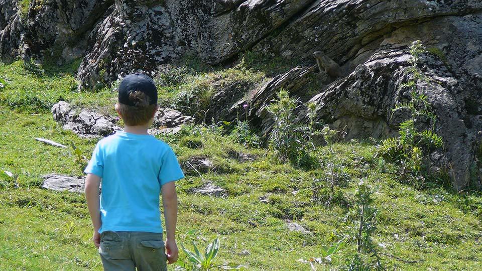 Marmotte-Compagnie-Famille-Bureau-Guides-Ariege-Pyrenees-5