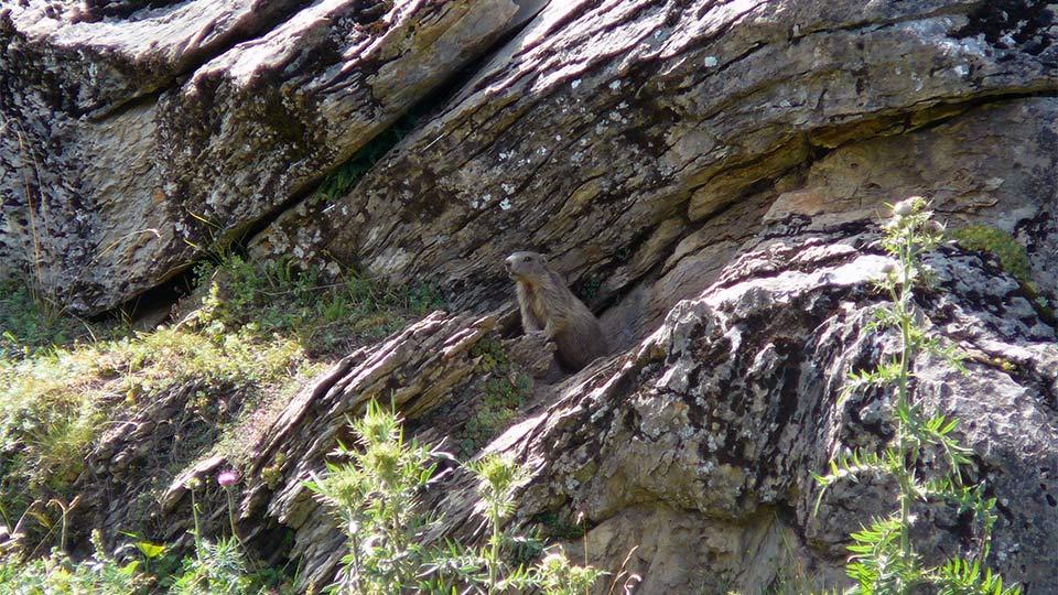 Randonnée - Marmottes et compagnie - Famille - Bureau des Guides Pyrénées Ariège - 4