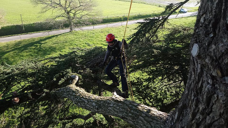Grimpe d'arbres géants à Ax les Thermes dans le parc du Teich